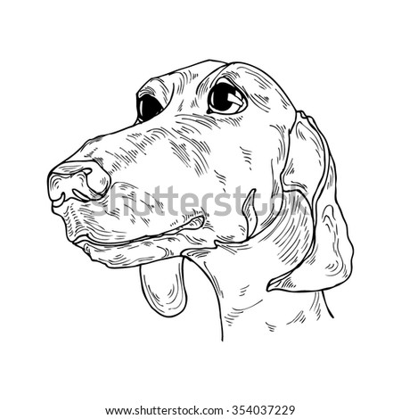 Cute hand drawn dog portrait in vector - stock vector
