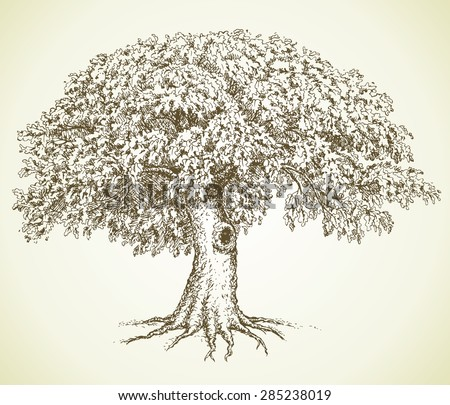 Cute mighty tree with hollow and lush green leaves on grass glade. Vector monochrome freehand linear ink drawn backdrop sketchy in art scribble antique style pen on paper with space for text on sky - stock vector