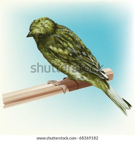 cute passerine canaria-bird - stock vector