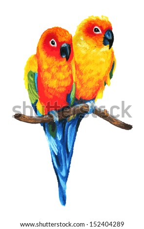 cute Sun Conure or Sun Parakeets vector of birds isolated on white background, colorful parrot couple perched on branch, bird wildlife image illustrated in hand drawn oil pastel painting  - stock vector