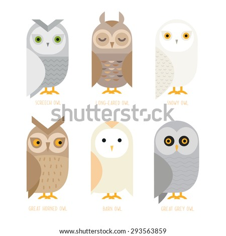 Cute vector owl characters showing different species include screech owl, long-eared owl, snowy owl, great horned owl, barn owl and great grey owl. Owl icons, Vector illustration. - stock vector
