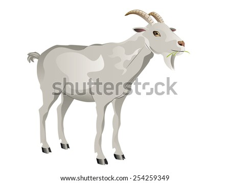 Cute white goat, cartoon animal on white background. - stock vector