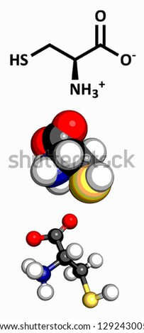 Cysteine (Cys, C) amino acid, molecular model. Amino acids are the building blocks of all proteins. Atoms are represented as spheres with conventional color coding: hydrogen (white), etc - stock vector