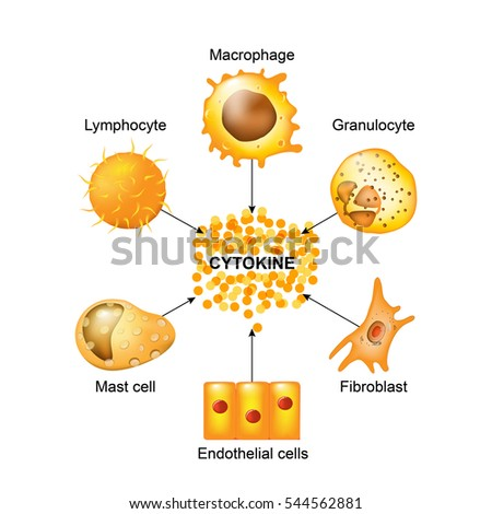 Cytokines are produced by macrophages, lymphocytes, mast cells, endothelial cells and fibroblasts. Cytokines include chemokines, interferons, interleukins, lymphokines, and tumour necrosis factors