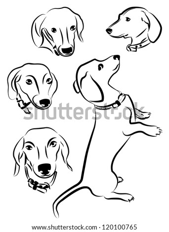 Dachshund dogs silhouettes isolated on white background - stock vector