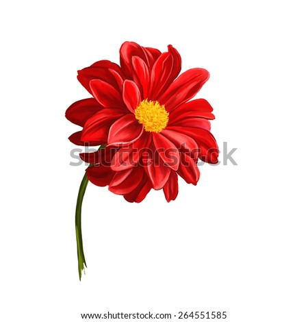 dahlia flower vector illustration  hand drawn  painted watercolor  - stock vector