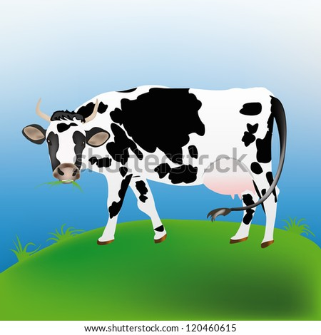 Dairy cow over spring green meadow.Agriculture - stock vector