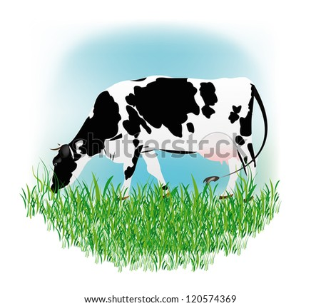 Dairy cow over white background.Vector illustration - stock vector