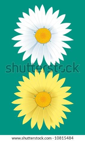 daisy blossom - stock vector