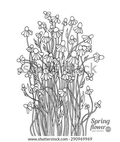 Daisy, camomile, chamomile wild forest flowers bouquet. Vector. Hand drawn artwork. Love concept for wedding invitations, cards, tickets, congratulations. Black and white - stock vector