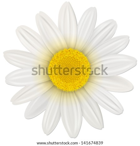 Daisy, flower isolated, vector illustration. - stock vector