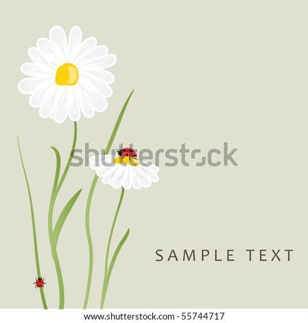 Daisy flowers and ladybug. Vector card - stock vector