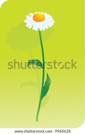 Daisy. Vector. - stock vector