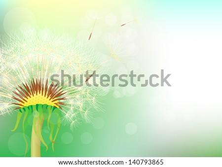 dandelion abstract background - stock vector