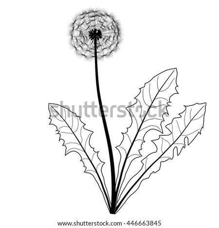 dandelion black and white isolated on white background - stock vector
