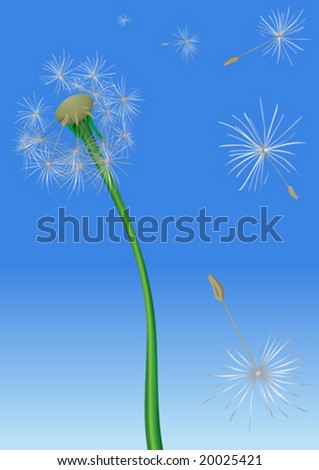 Dandelion blowing seeds in the air