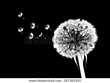 Dandelion flower - stock vector