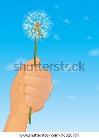 Dandelion Flower Vector Illustration - stock vector