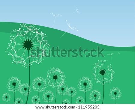 Dandelion flowers blowing in a grassy field - stock vector