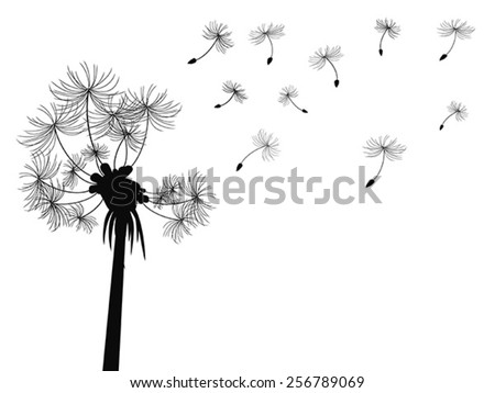 dandelion flying background