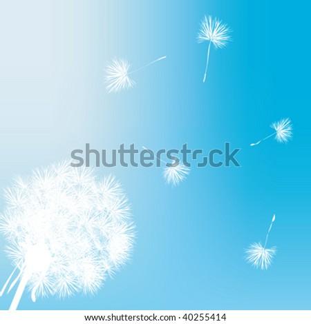 Dandelion gift card illustration - stock vector