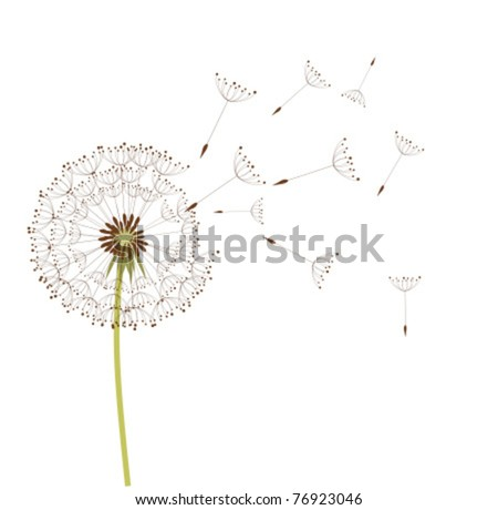 Dandelion in the wind. Vector background - stock vector