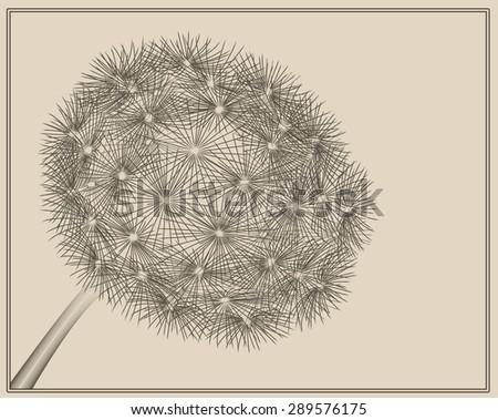 dandelion in vector woodcut style - stock vector