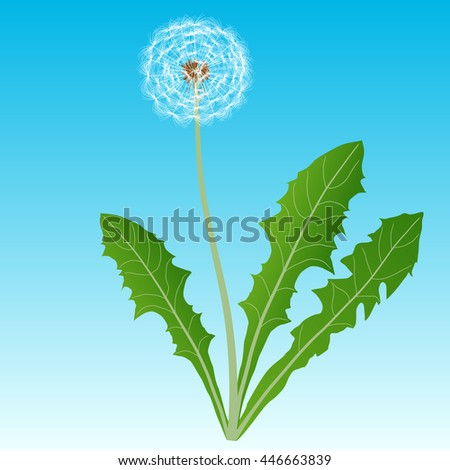 Dandelion on a blue background - stock vector