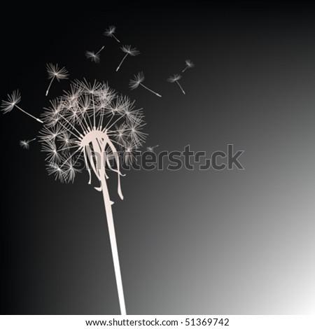Dandelion on black background - stock vector