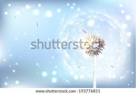 Dandelion on the blue background. Vector illustration. Vector Dandelion.