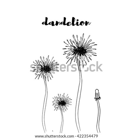 Dandelion pattern. hand drawn illustration. Vector background
