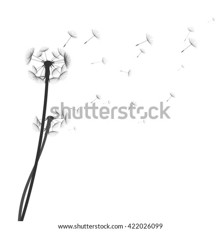 Dandelion silhouette on white background