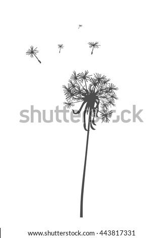 Dandelion silhouette - vector illustration.  - stock vector