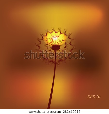 Dandelion, spring flower on background of sunset,  vector illustration.  Place for text.