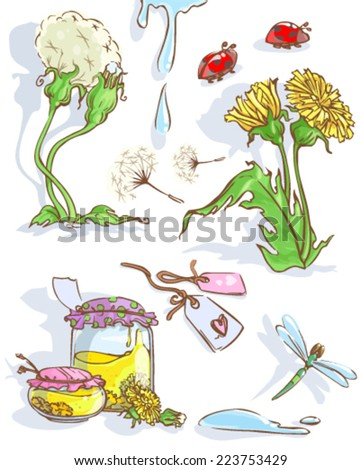 Dandelion with dragonfly. - stock vector