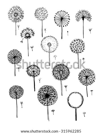 Dandelions collection, sketch fro your design. Vector illustration