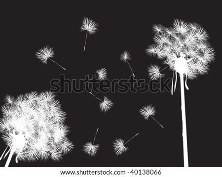 Dandelions in the night, desktop background - stock vector