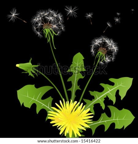 dandelions in wind on light blue background