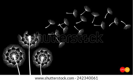 Dandelions on the black background - stock vector