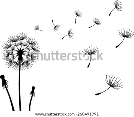 Dandelions on the white background. Vector illustration - stock vector