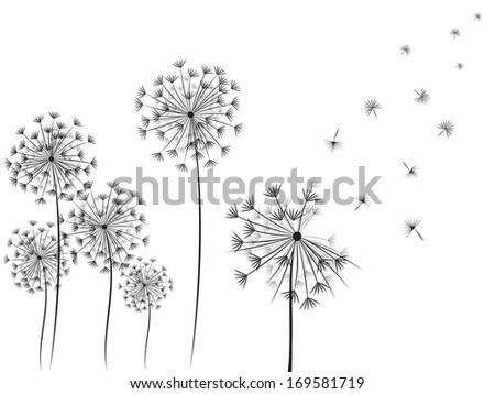Dandelions vector. - stock vector