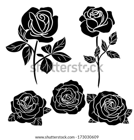 dark  roses on white - stock vector