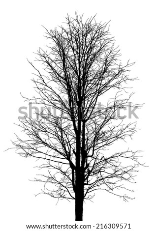 Dead trees Isolated vector, Branch trees isolated vector