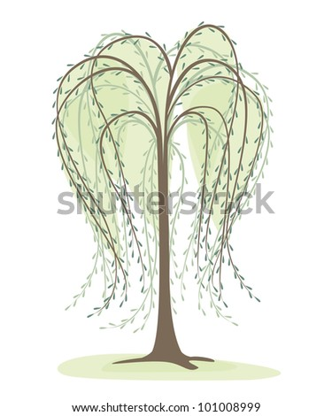deciduous tree on a white background, willow - stock vector