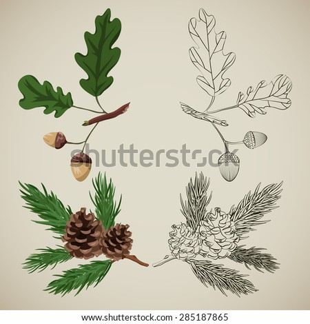 decorative elements, forest tree branches - stock vector