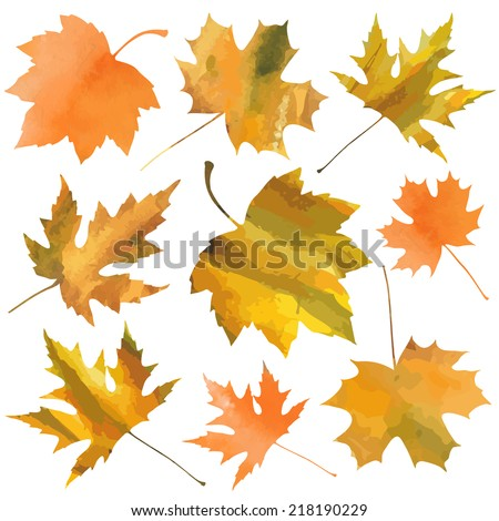 decorative maple leaves isolated on white background. vector illustration  - stock vector