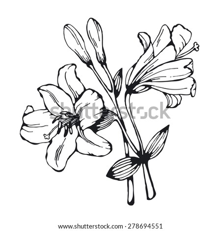 Decorative monochrome outline lily in black and white color