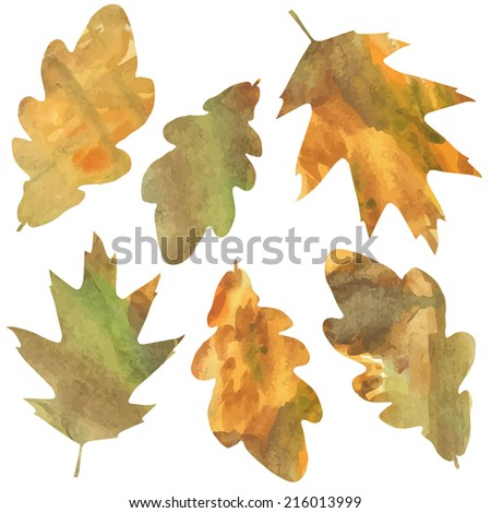 decorative oak leaves isolated on white background. vector illustration  - stock vector