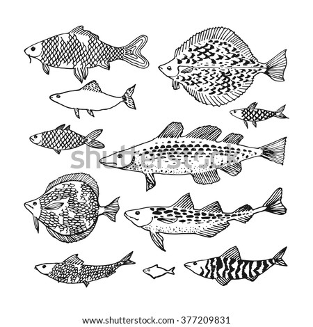 Graphic aquarium fishes drawn line art stock vector for Japanese ornamental fish