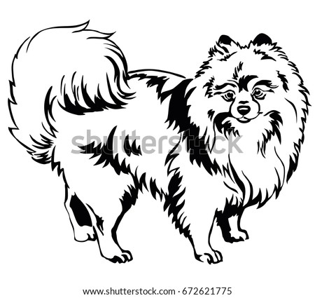 Black white linear draw lion vector stock vector 453186130 decorative portrait of standing in profile dog breed spitz pomeranian vector isolated illustration ccuart Choice Image